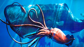 Giant Squid and Whale