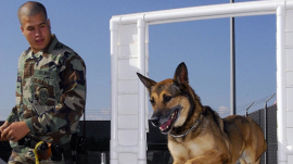 Military Dog With Handler
