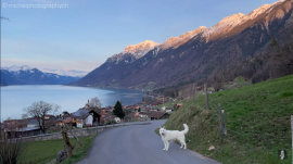 Sylvia Michel's video of the Emmental Alps with the dog named Rasta