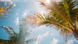 Sunny Florida weather